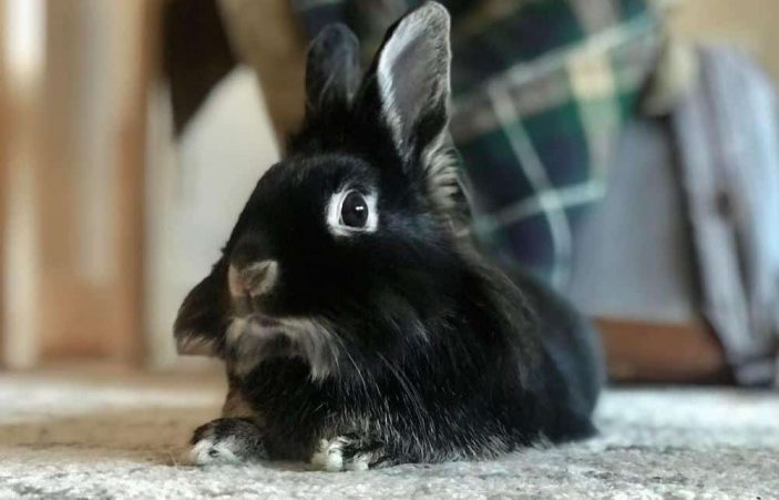 Can rabbits get hiccups