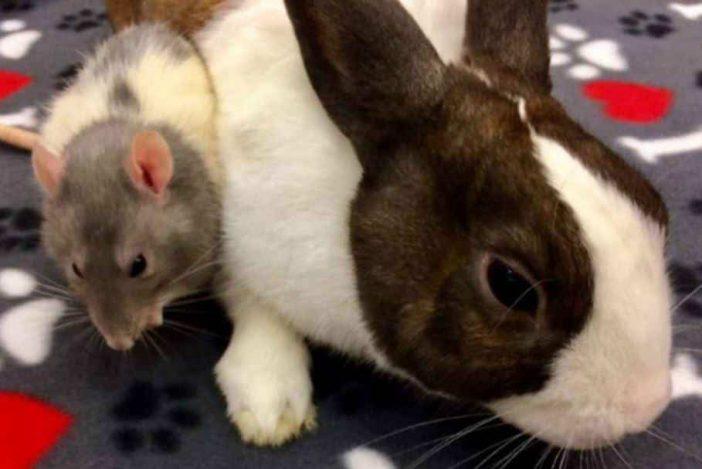 Do rabbits eat mice and rats
