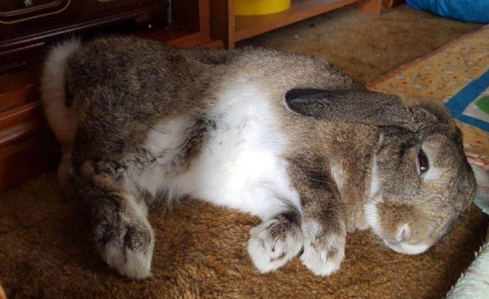Rabbit paws