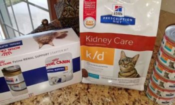 Diets and Foods for Cats with Kidney Disease – Best Renal Diets