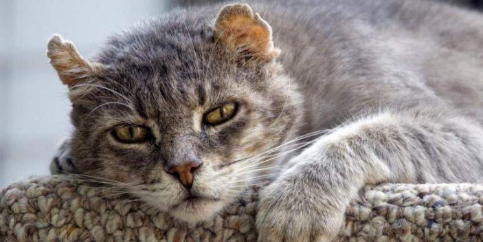 Low potassium in elderly cats