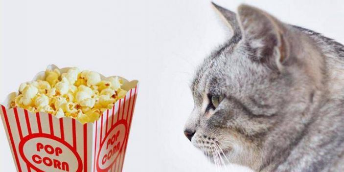 Can I give some popcorn to my cat