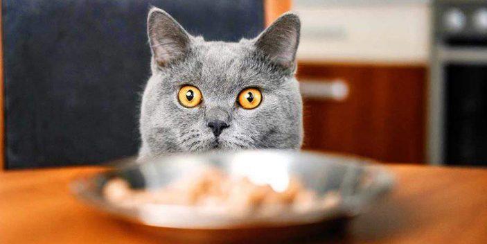 Do cats need threonine