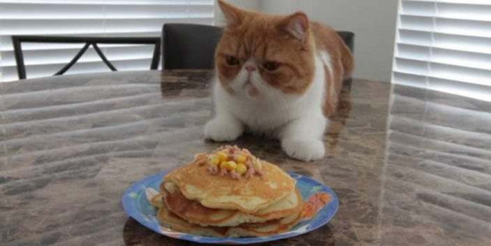 Making your cats pancakes