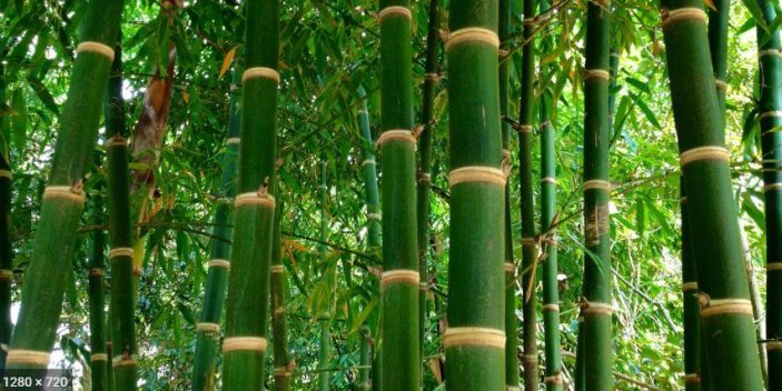 Bamboo tree -safe for cats