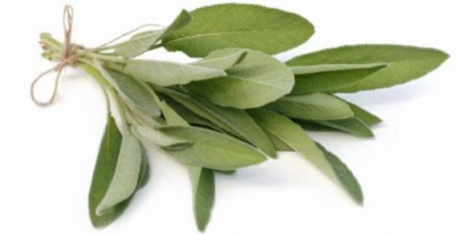 Can cats eat sage?