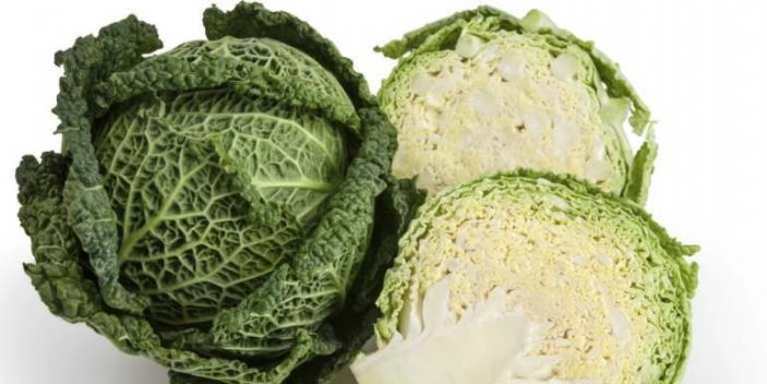 Is cabbage ok for cats