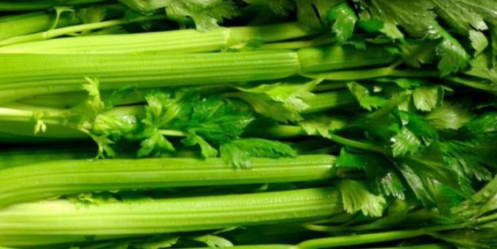 Is it ok for cats to eat celery