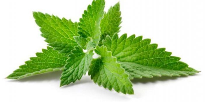 Is spearmint safe for dogs