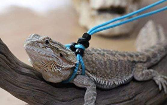 Adjustable Reptile Leash™ Harness