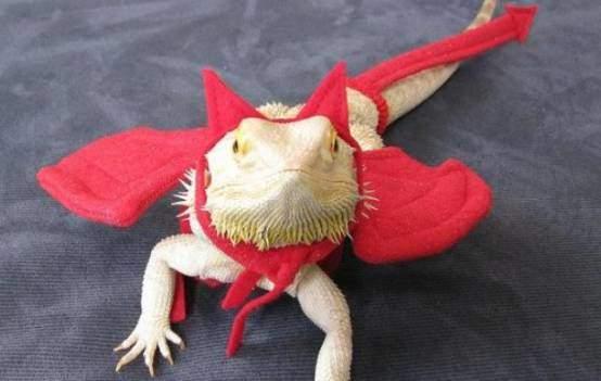 Bearded dragon Devil's costume