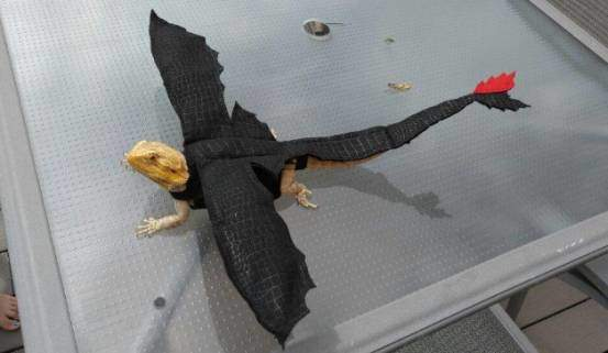 Bearded dragon Toothless costume