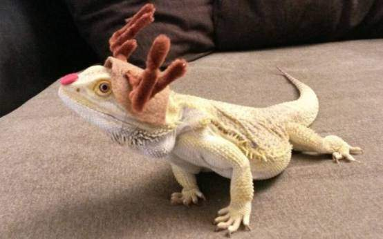 Bearded dragon costumes and outfits