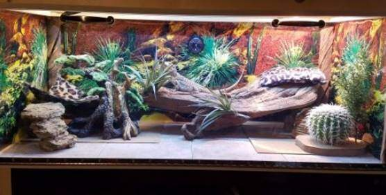 Bearded dragon decor and furniture