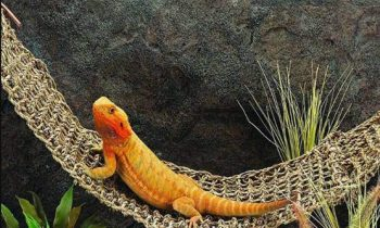 Best Bearded Dragon and other Reptile Hammocks