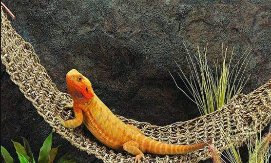 Large Hammock for Bearded Dragons Or Other Small Animals LH1