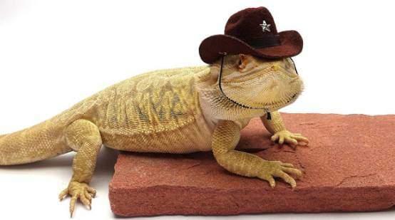 Carolina Designs Cowboy hats