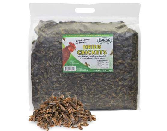 Dried Crickets (2.2 lb.) - High Protein Insect Treat