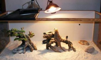 Best Bearded Dragon Heat Lamps and Temperature