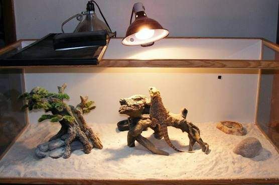 Heat lamps for bearded dragons