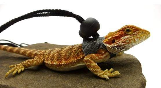 Ogle Lizard Leash, Limited Edition Black Web