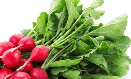 Radish and radish greens or leaves