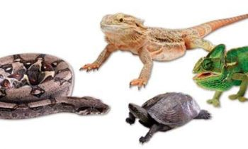 Best Reptile Calcium, Vitamin D3, and Multivitamin Supplements