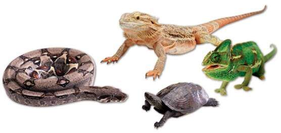 Reptile Supplements