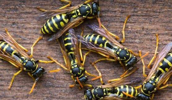 Wasps, scorpions, and bees