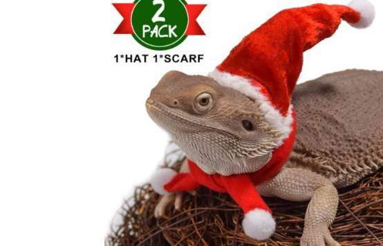 Watfoon bearded dragon lizard Santa hart with scarf