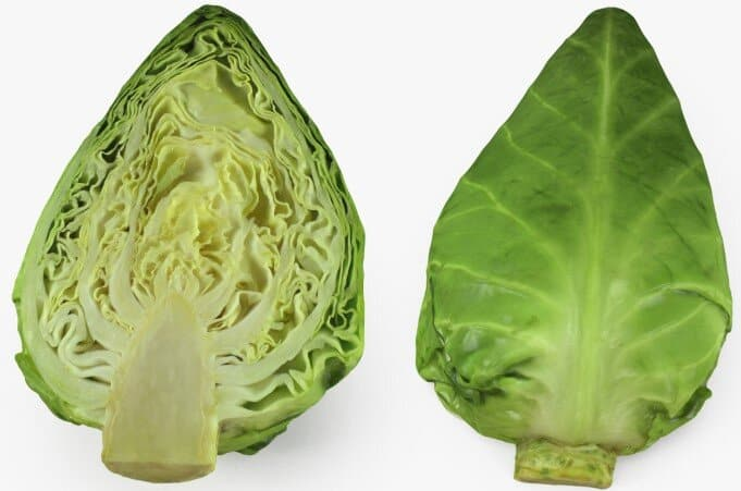 Can rabbits eat sweetheart cabbage