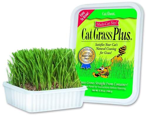 Cat-About by MiracleCorp Gimborn Single Cat Grass Plu