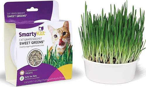SmartyKat Sweet Greens Cat Grass Seed Kit