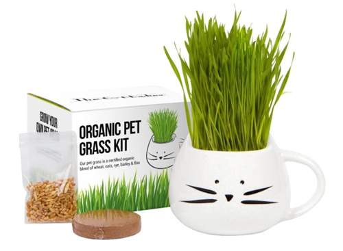 The Cat Ladies Organic Pet Grass Growing kit with Planter