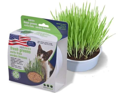 Van Ness Cat Oat Garden Kit