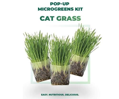 Window Garden Pop Up Cat Grass Kit – 3 Pack