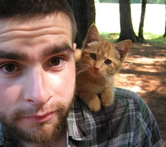 Kitten on shoulder Courtersy of toychristopher - imgur