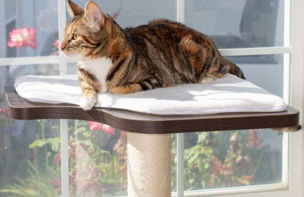 Why do cats love perching on high places