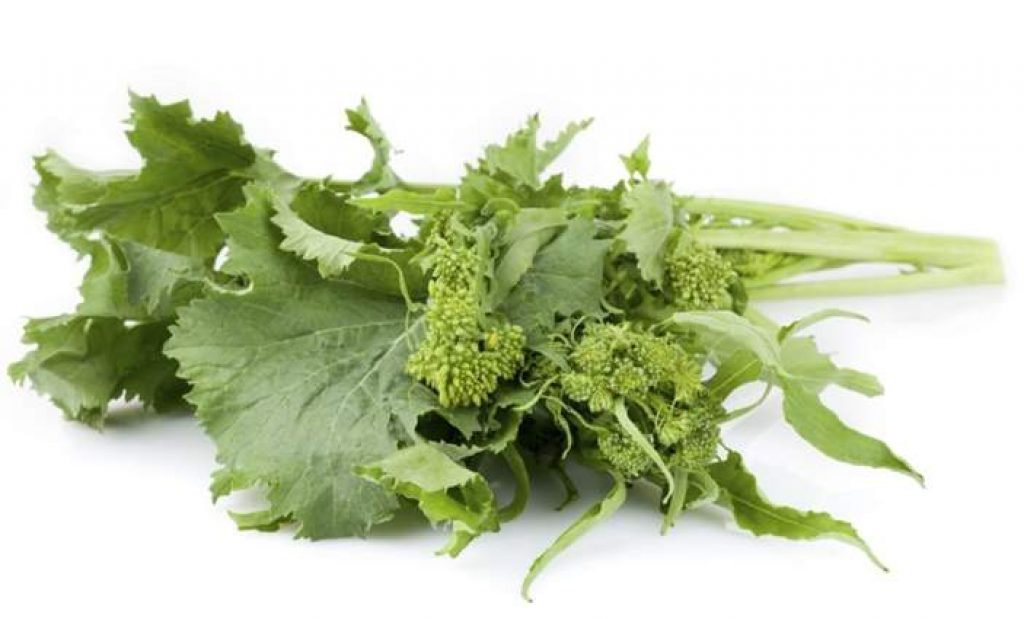 Can rabbits eat broccoli rabe