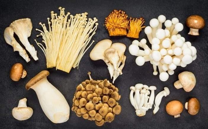 Can rabbits eat mushrooms