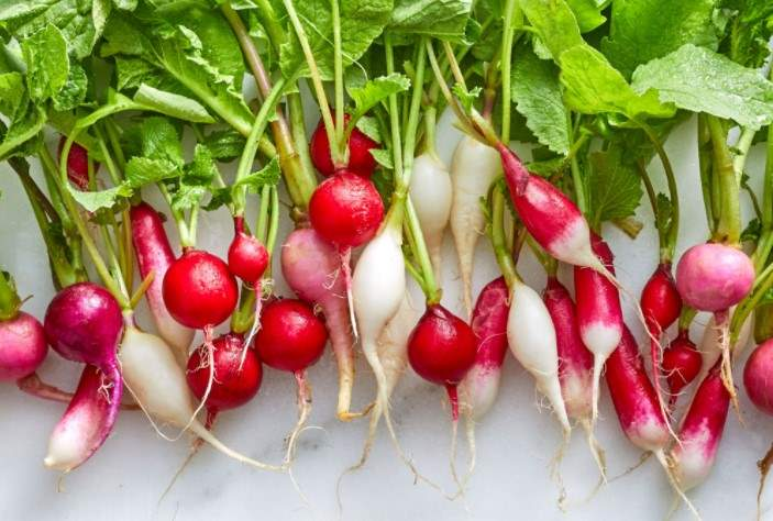Can rabbits eat radishes