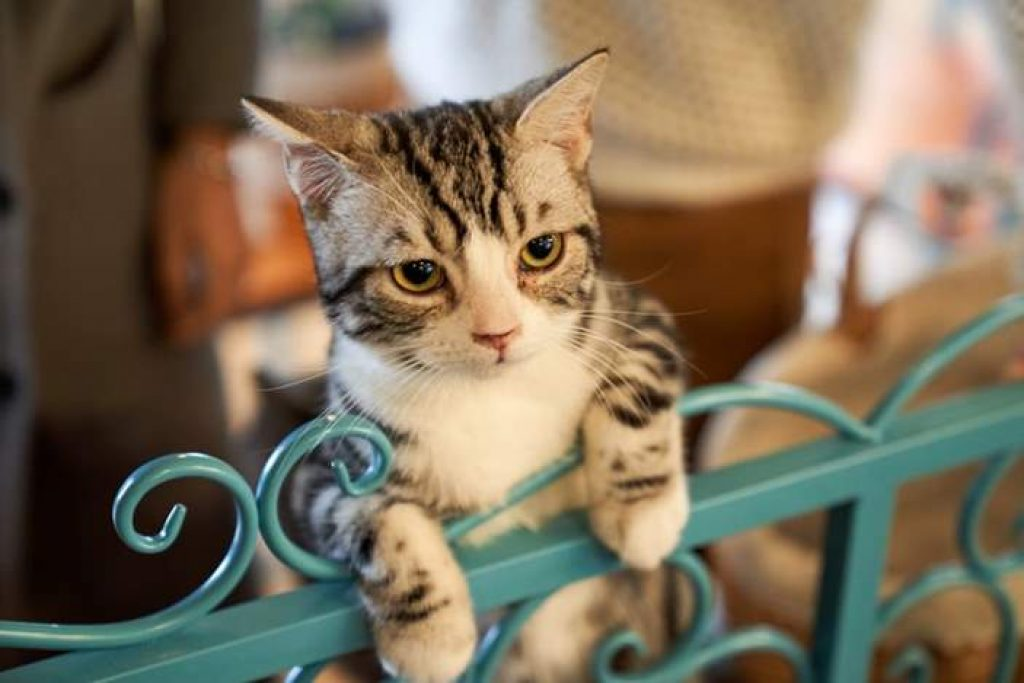 Probiotics for cats buying guide