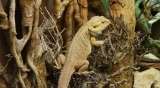 11 Best Reptile Climbing Branches, Logs, or Trees