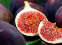 Can Rabbits Eat Figs and Their Leaves?