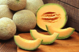 Can Dogs Have Cantaloupe?