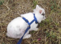 Best Rabbit Harness Leash Brands for Sale