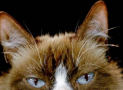 Role of the Cat Eyebrow Whiskers