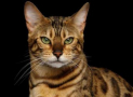 Functions and Deficiency of Potassium in Cats