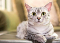 Vitamin B6 Functions and Deficiency Signs in Cats