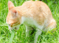 Is Folic acid for Cats Necessary? What Are Its Roles?
